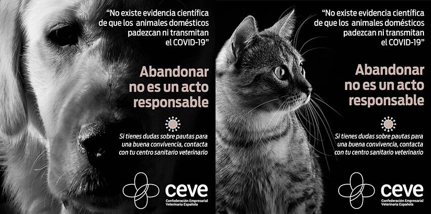 Cómo sobrevivir al Coronavirus con animales en casa